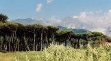 pinien und berge – marina de carrara Kopie